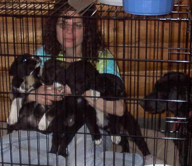 Ilana in the crate holding 4 pups. Momma-pup is next to me.